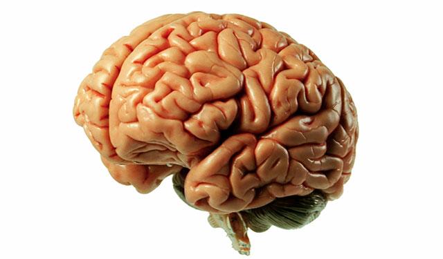 concussion-brain.jpg